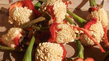 semillas de pimientos