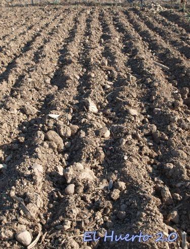Cultivo de garbanzos el huerto 2 0 for Preparar el huerto en invierno