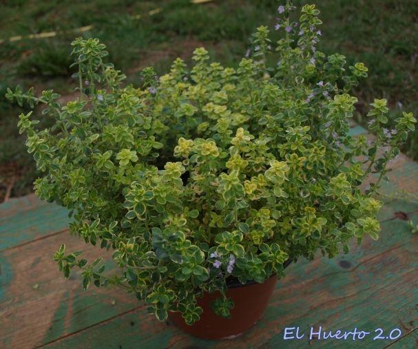 Plantar el huerto 2 0 p gina 2 - Plantar limonero en maceta ...