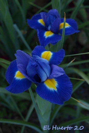 Belleza en azul