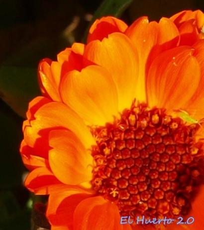 Ltima semana del a o en florecer el huerto 2 0 for Picor en el interior del ano