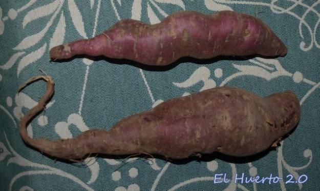 Diferencia de tamaño, entre dos de los más grandes. El de abaj oya secado, el otro antes de ponerlo en la secadora