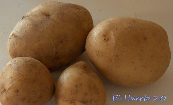Patatas blancas