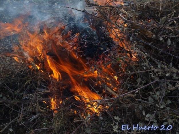 Fuego ardiendo con alegria
