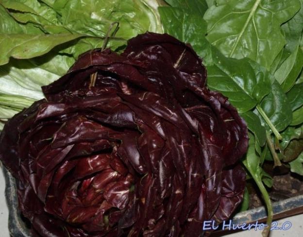 Achicorias y otras verduras