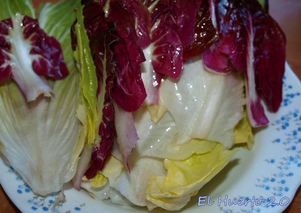 Achicorias para la ensalada