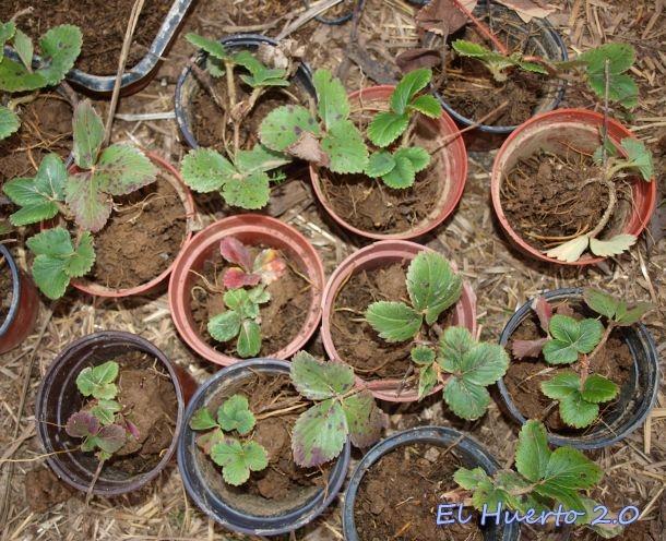 Tiestos con plantas