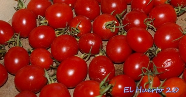 NuNuevo Tomate Rojo de Invierno