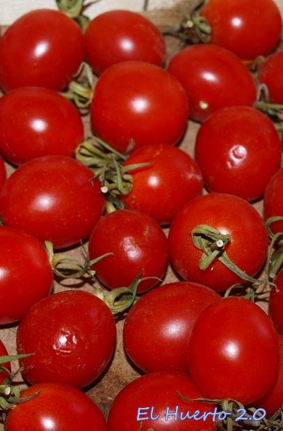 Tipos de tomates el huerto 2 0 - Cuando plantar tomates ...