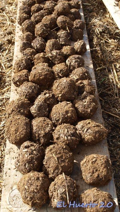 Bolas  amasadas junto a las semillas