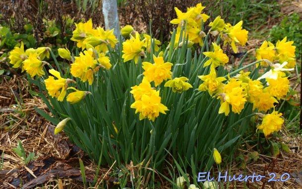 A plena floración
