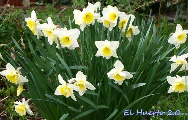 En blanco y corazón amarillo