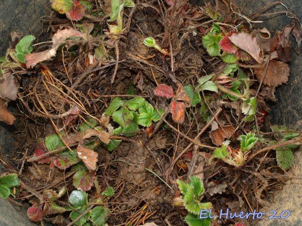 Plantas listas para su trasplante