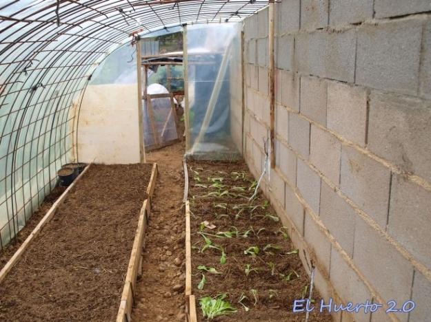 Listo con los semilleros comenzando a recibir lechugas