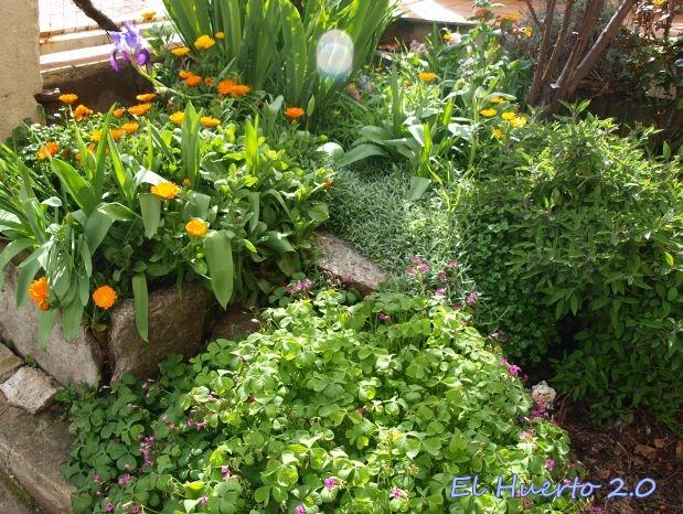 Zona del jardin  frontal