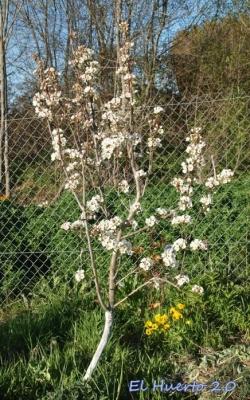 Árbol de Barlett