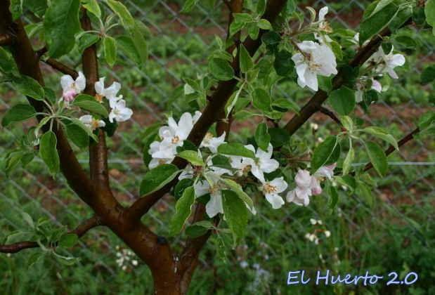 Flores del Fuji