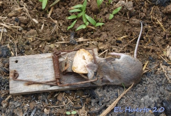A los ratones les gusta el pan