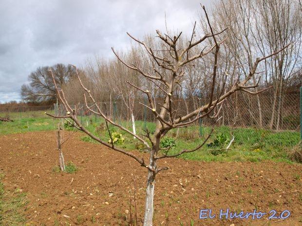 poda del manzano el huerto 2 0 On poda del manzano