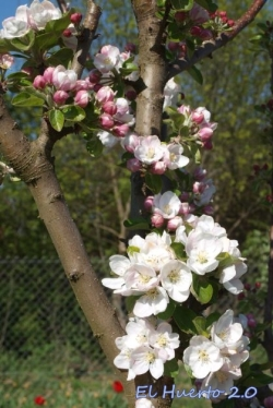 Detalle de la floración