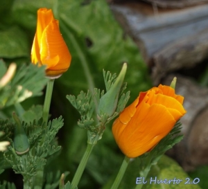 Hojas capullos y flores