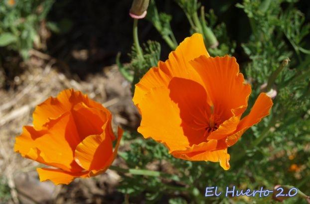 De grandes flores naranja