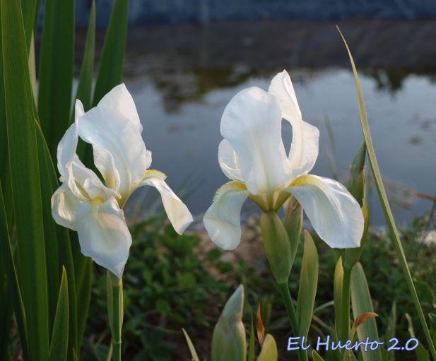 flores con hiedras lirios margaritas - thebellmeadecom
