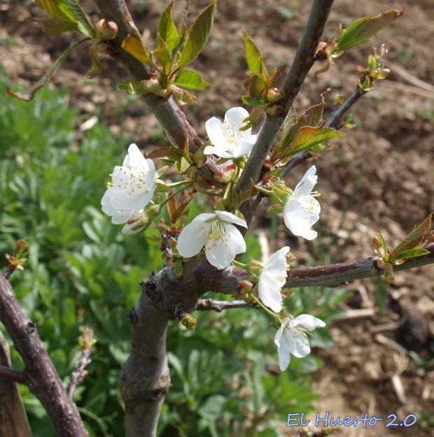 Primer año de flor