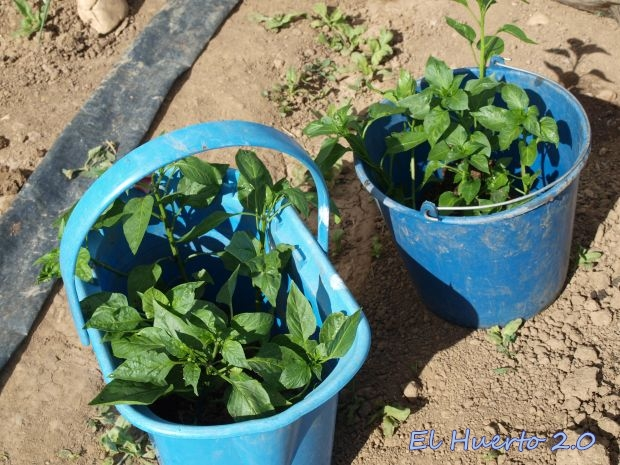 Trasladando las plantas