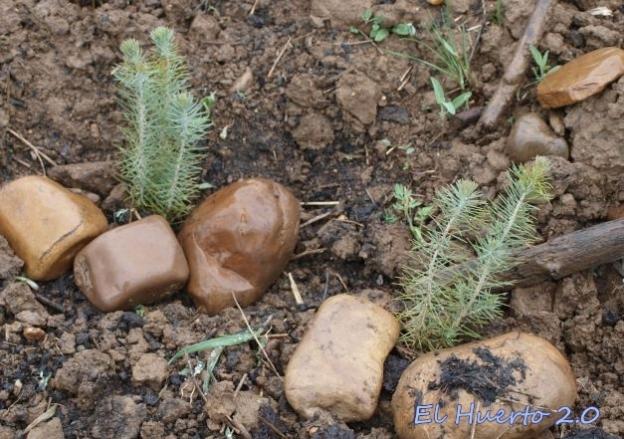 Plantas bajo las lluvias de abril