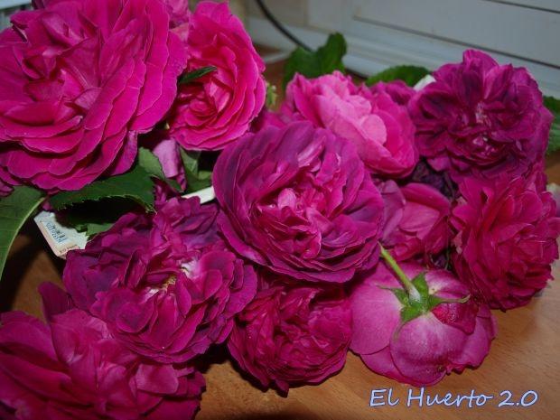 Con las rosas en la cocina