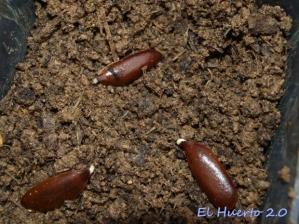 semillas tierra
