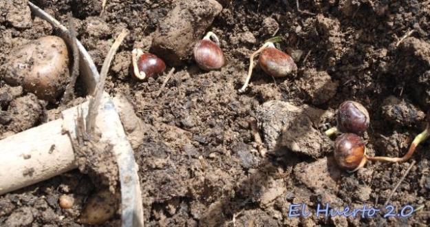 Preparando el semillero