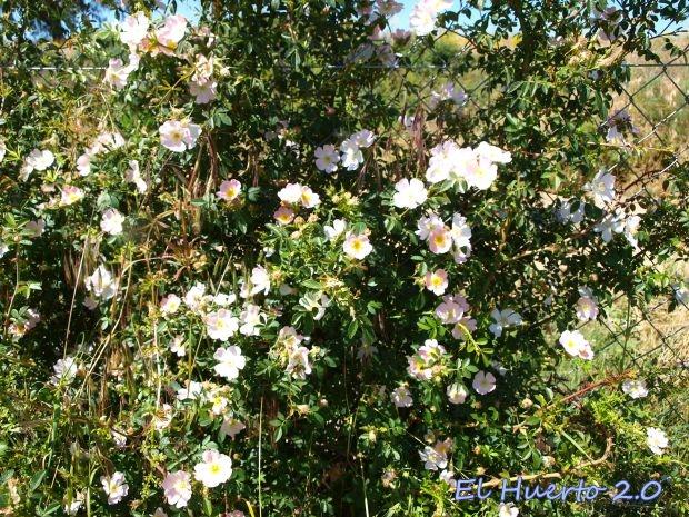 Cargado de flores