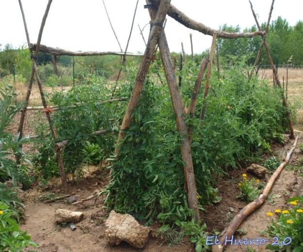 Nueva estructura para las tomateras