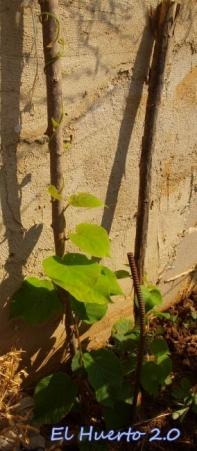 Plantas jóvenes