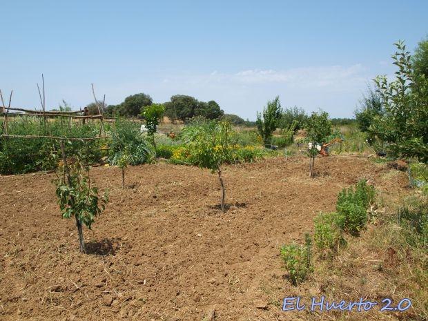 Terreno desèjado para los cultivos tardíos
