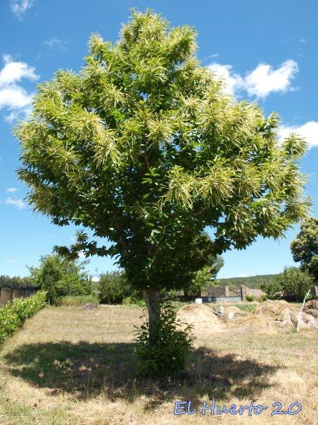 Árbol joven lleno de vigor