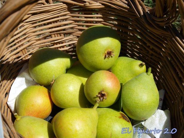 Primeras peras de la cosecha