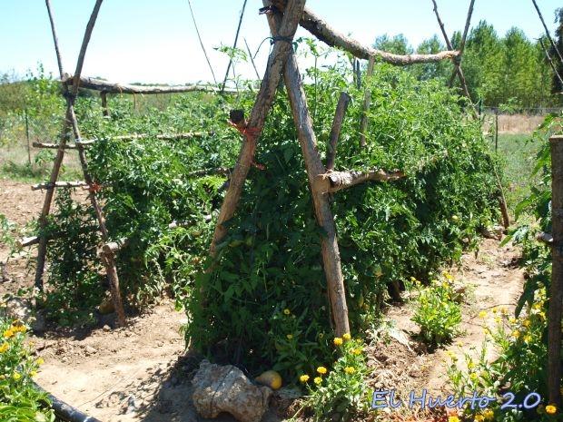 Crecimiento de los tomates