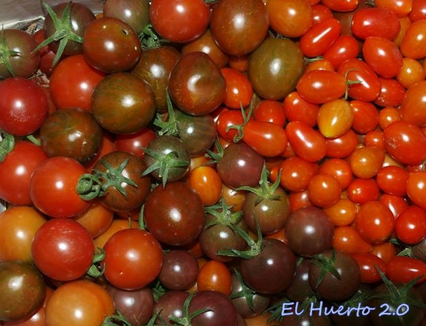 Diferentes tipos de tomates pequeños