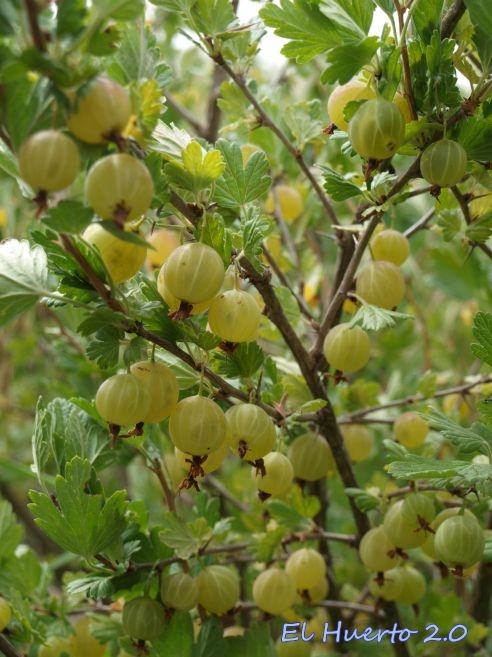 Abundancia de fruta