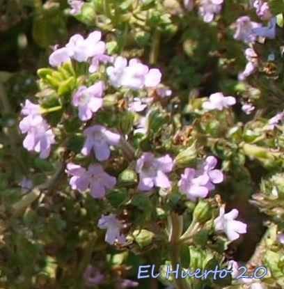 Flores de cerca