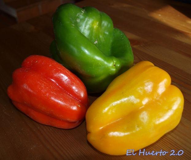 Pimientos rojo, verde y amarillo