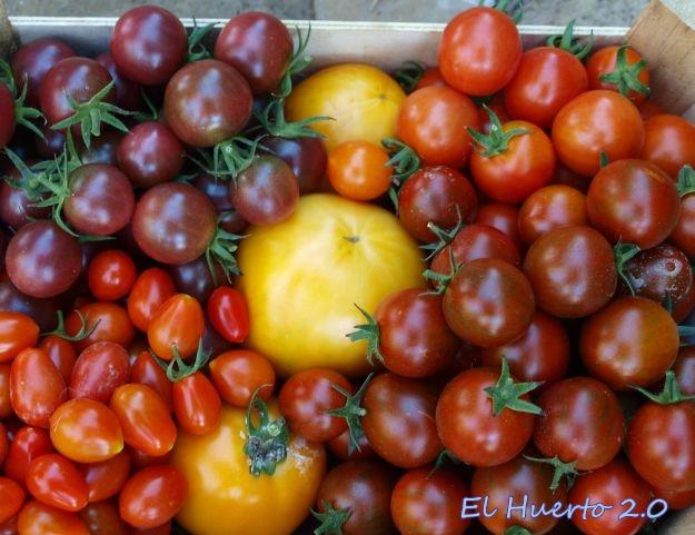 Tomates de la cosecha verano 2013