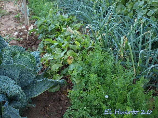 Remolacha, zanahorias, cebollas