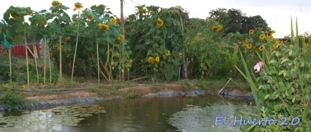 Junto al estanque