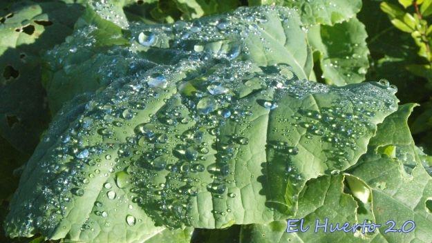 Gotas de agua sobre hoja de Colinabo