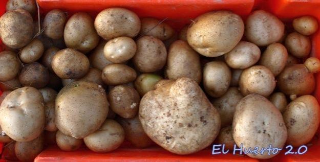 Total de la cosecha, 10 kilos y pico