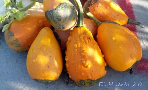 Naranjas verrugosas